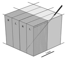 Hubel and Wiesel's ice cube tray model.  From Horton and Adams (2010); originally adapted from Hubel et al. (1976).